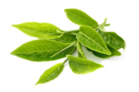 green tea leaves