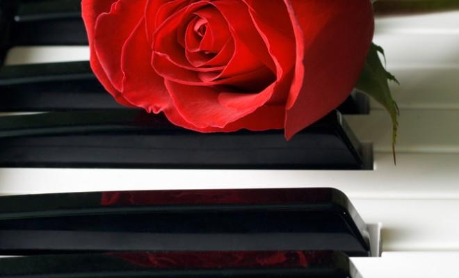 A rose on piano keys